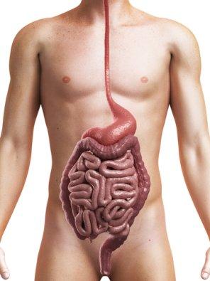 крупные паразиты в организме человека