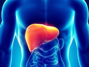 watroba-hepatil-300x225